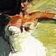 Aleksandra Hajdas - Rutkowska - wystawa malarstwa pt. Nie jestem grzeczna… - Galeria Schody - 06-17.01.2014