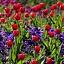 Wiosenne Warsztaty Florystyczne dla Dorosłych