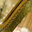 Francuska muzyka harfowa