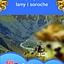 Peru, czyli Lima, lamy i soroche