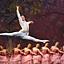 Moscow City Ballet w Łodzi