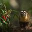 Amazonia. Przygody małpki Sai