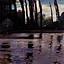Topole nad wodą