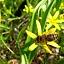 Cztery pory roku w ogrodach wilanowskich