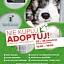 """Nie kupuj… Adoptuj! Akcja """"Dołącz do Nieobojętnych"""" w Galerii Bronowice"""