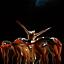EMOCJE - spektakl baletowy Opery Krakowskiej