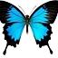 """""""Chrząszcze, motyle i modliszki. Orientalna entomologia dla dzieci"""""""