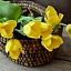 Wiosenne Warsztaty Florystyczne na Dzień Matki