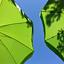 Po parasolkami / warsztaty przyrodniczo-plastyczne