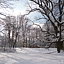 FLORA W ZIMOWEJ SZACIE | wycieczka po parku wilanowskim