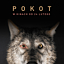 """Pokot"" - Nasze Kino"