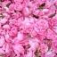 """Dlaczego róże w Bułgarii pachną najpiękniej?  Bułgarskie opowieści muzyczne z Doliny Róż"""" –  zajęcia  dla dzieci"""