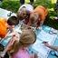 WAKACYJNE SPOTKANIA Z PRZYRODĄ | warsztaty dla rodzin w parku wilanowskim