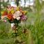Krajobrazy florystyczne – warsztaty rękodzieła artystycznego
