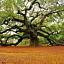 """""""Opowieść o magicznym drzewie. Zaczarowane historie z Indii"""""""