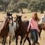 Wicher – dzikie konie