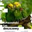 Amazoński las deszczowy - warsztaty dla dzieci w DK Kadr