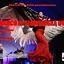 Flamenco ze słowiańską duszą – koncert zespołu Madrugada