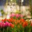 """""""Tulipanowy prezent"""" – warsztaty florystyczne dla dzieci"""