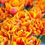 """""""Tulipan – kwiat o wielu znaczeniach"""" – warsztaty plastyczne dla dzieci"""