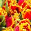 """""""Tulipany – papierowy handmade"""" – warsztaty plastyczne dla dzieci"""