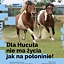 Dla Hucuła nie ma życia jak na połoninie!