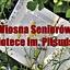 Wiosna Seniorów w Bibliotece im. Piłsudskiego