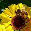 Bielańskie pszczoły – otwarcie pasieki i rodzinne warsztaty pszczelarskie
