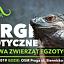 ZooEgzotyka