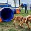 Inauguracja strefy treningowej dla psów