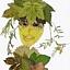 Twarze z liściakowej krainy
