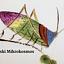 Wystawa | Przedstawienia owadów na ceramice