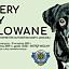 FINISAŻ: Cztery łapy malowane - adoptuj psa z portretu!