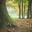 Wilanowski Klub Przyrodniczy - Drzewo mój dom