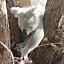 Dwuletnia podróż po Australii - Kasia Szumna