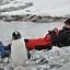 Antarktyda - Gosia i pingwiny!