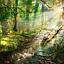 Duchy Natury i  Szamańskie Uzdrawianie – Warsztat Zaawansowany Uzdrawiająca Moc Szamańskiej Podróży