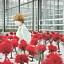 """""""Kwiat szczęścia"""" premiera w kinie DCF"""