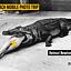 "Mobile Photo Trip | pokaz filmu ""Helmut Newton. Piękno i bestia"""